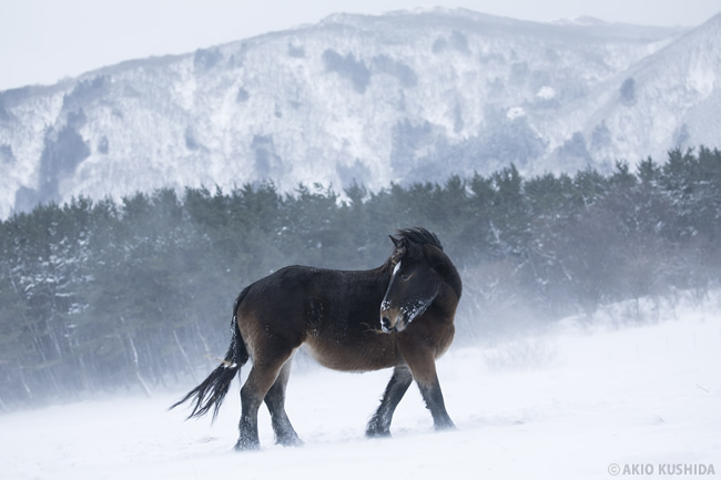 串田明緒写真展「Talking with the Horses - naked winter -」